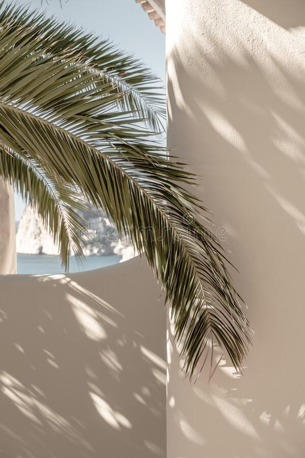 Free Palm Leaf Beautiful Shadows On The Wall. Creative, Minimal, Bright And Airy Styled Concept Stock Image - 181812201