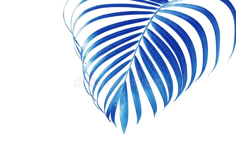 Palm Leaf in Blue Tone Color Isolated on White Background royalty free stock photography