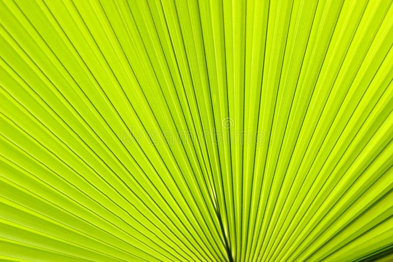 Palm leaf in a botanical garden, Minsk. Palm Leaf Botanical Garden Minsk stock image