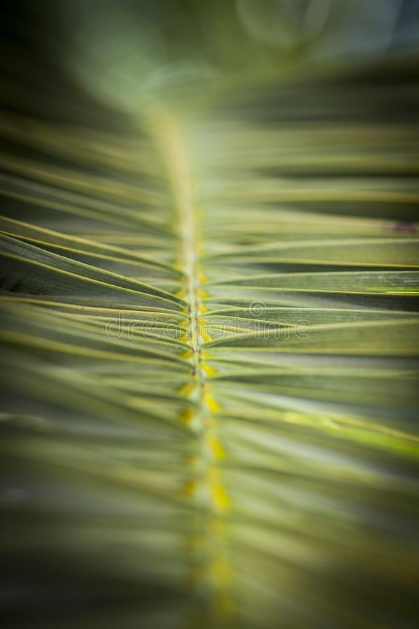 Palm leaf. A close up of a green palm leaf royalty free stock photos