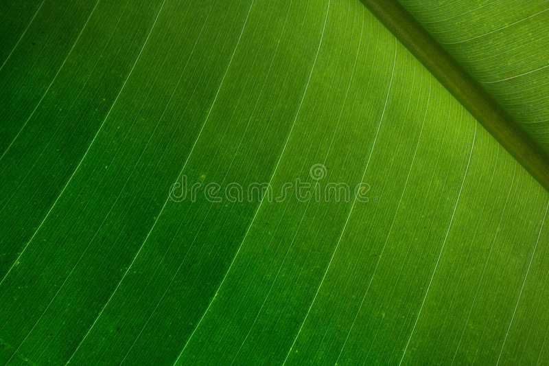 Palm leaf detail stock photography