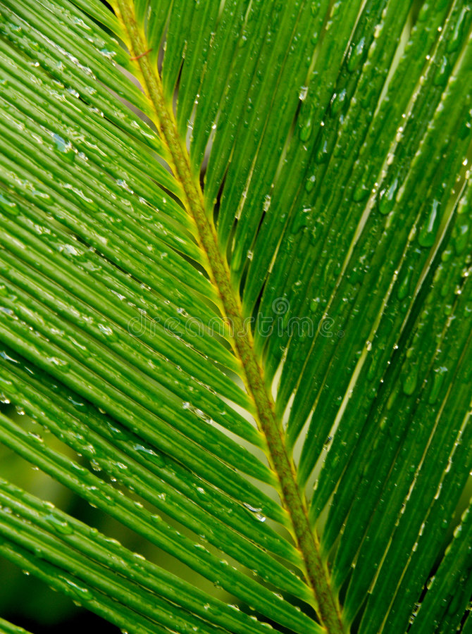 Palm leaf with drops