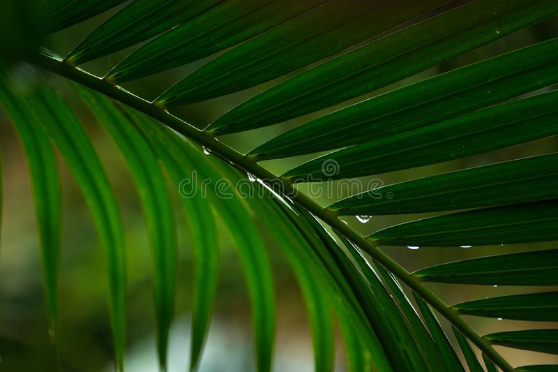 Close up the leaves of palm trees stock photos