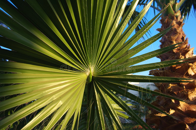 Palm leaf and palm tree stock photos