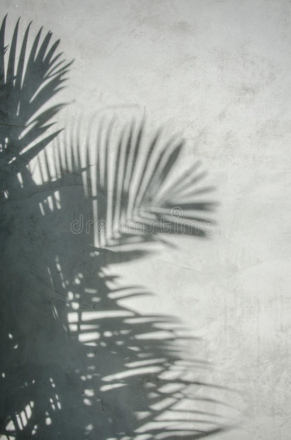 Download Palm Leaf Shadow On The Wall Stock Photo - Image: 57206910