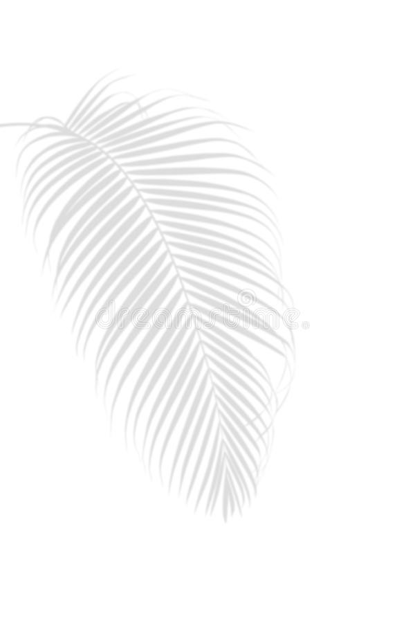 Palm leaf shadow on white, abstract nature tropical summer background. royalty free stock photo