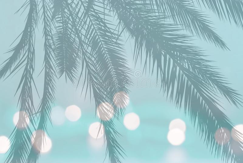 Palm leaf silhouette on festive blurry lights on soft teal turquoise royalty free stock images
