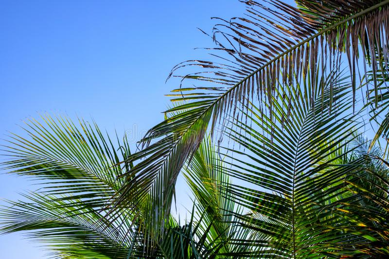 Palm leaf on sky background. Blooming tropical nature photo. Sunny tropic paradise banner template with text place royalty free stock photography