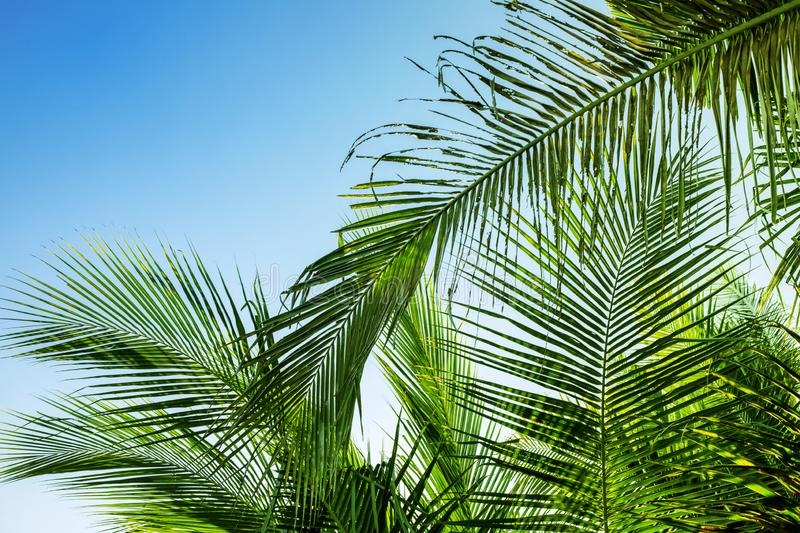 Palm leaf on sky background. Blue green tropical nature photo. Sunny tropic paradise banner template with text place. Green palm leaf minimalist photo. Exotic royalty free stock photography