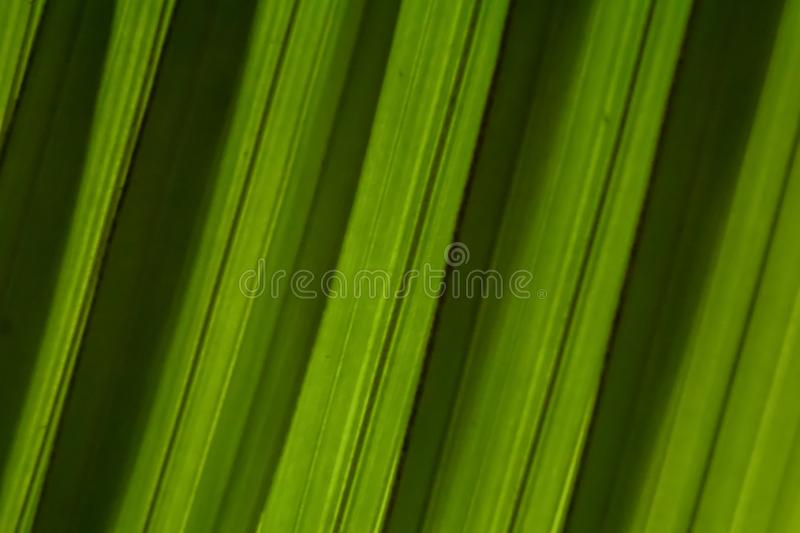 Palm leaf strips diagonal slope background texture. Dark green shadow stripes. Macro royalty free stock photography