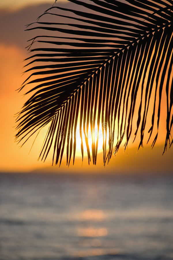 Palm Leaf At Sunset. Royalty Free Stock Photography