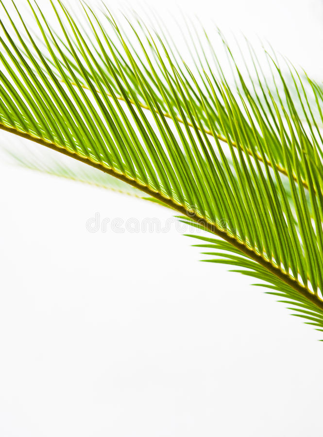 Download Palm leaf texture stock image. Image of green, leafy - 17177271