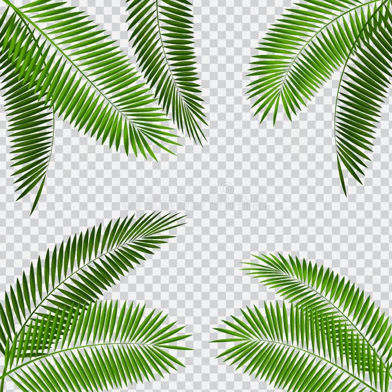 Palm Leaf Vector Illustration on Transparent Background royalty free illustration