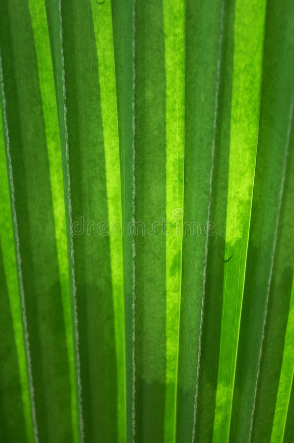 Download Palm Leaf With Vertical Lines(vertical) Stock Image - Image: 4929109