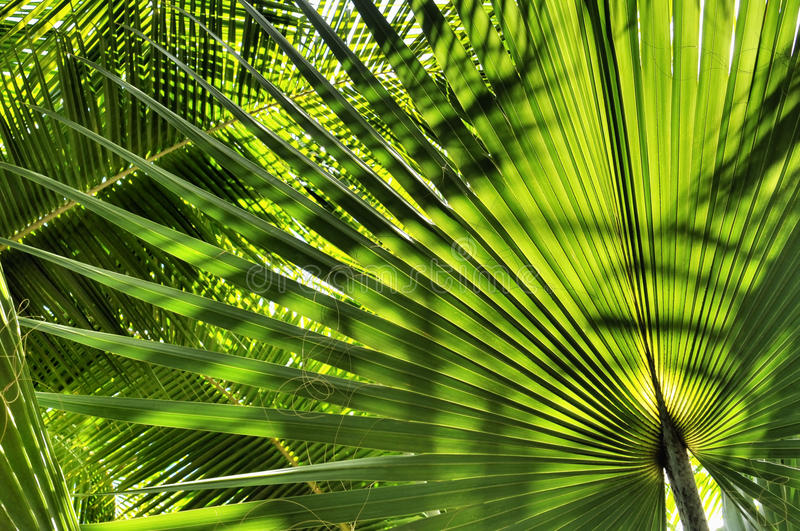 Download Palm Leaves stock photo. Image of leaf, beach, leaves - 11853642