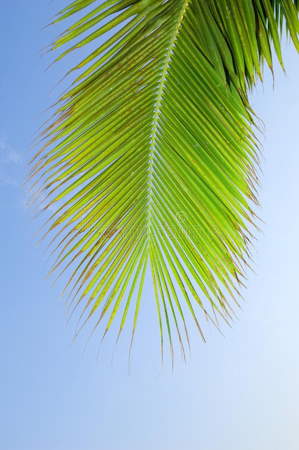 Download Palm leaves stock photo. Image of texture, shadows, tropical - 14860580