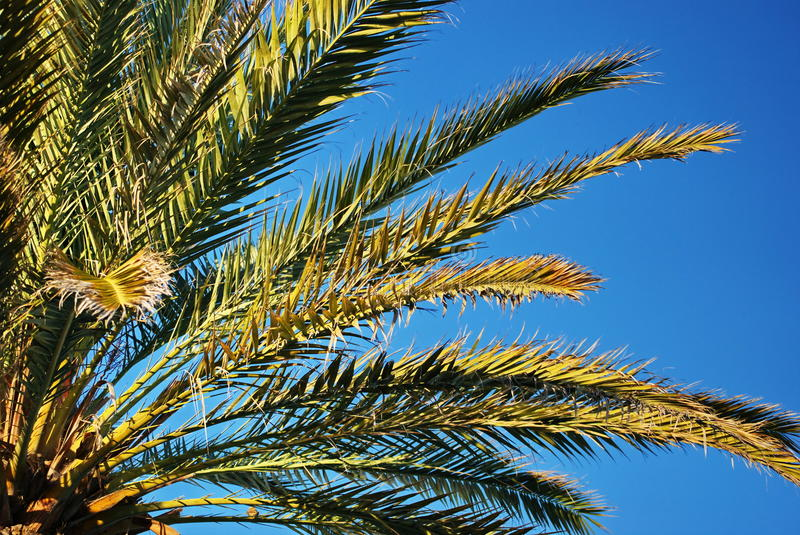 Download Palm leaves stock image. Image of outdoor, holiday, background - 16865943