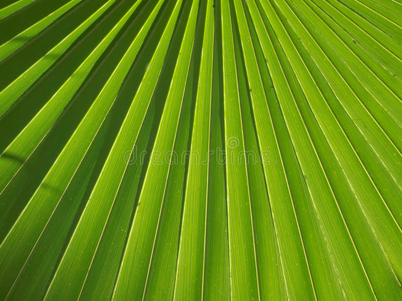 Download Palm leaves stock image. Image of garden, graphic, plant - 17644245