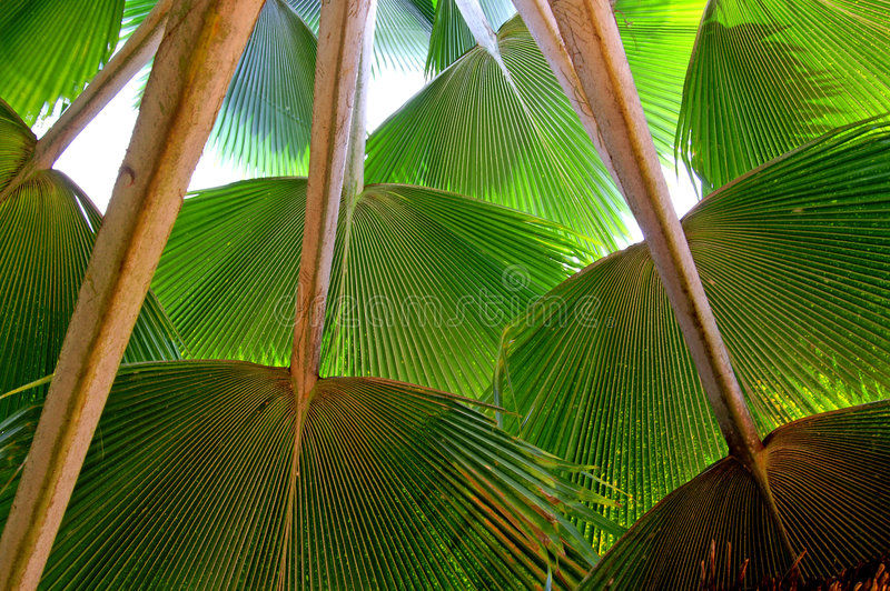 Download Palm leaves stock image. Image of exotically, green, spring - 2107705