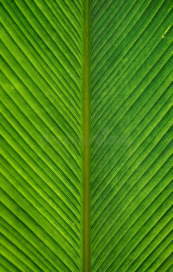 Download Palm leaves stock image. Image of exotic, outside, green - 21728585