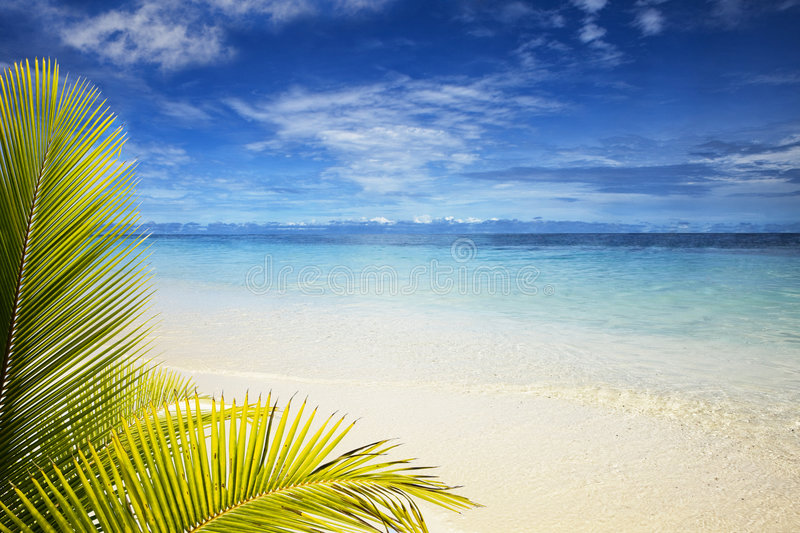 Download Palm leaves stock image. Image of travel, outside, summer - 4840859