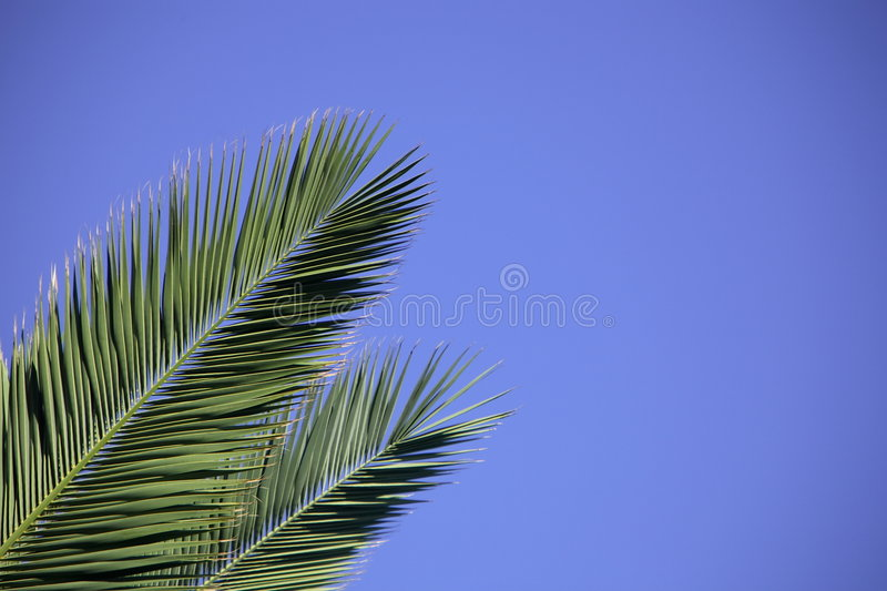 Download Palm Leaves Stock Photo - Image: 956670
