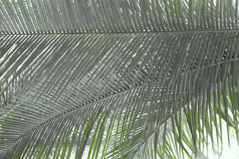 Palm Leaves - Abstract Natural Background with Shades of Green stock photography