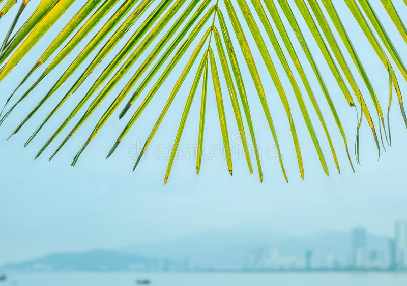 Palm leaves against the background of the city royalty free stock photos