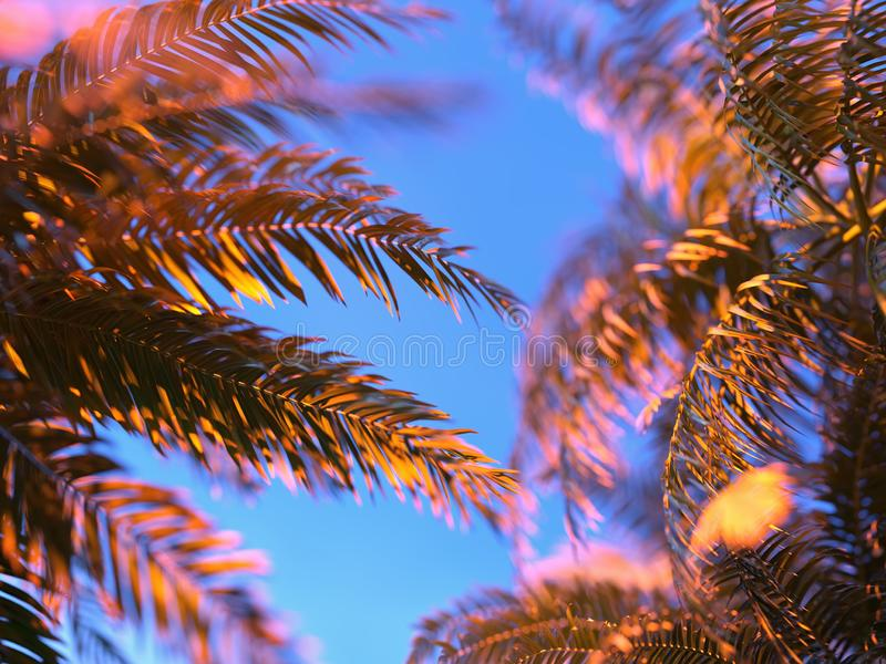 Palm leaves against the sky royalty free stock image