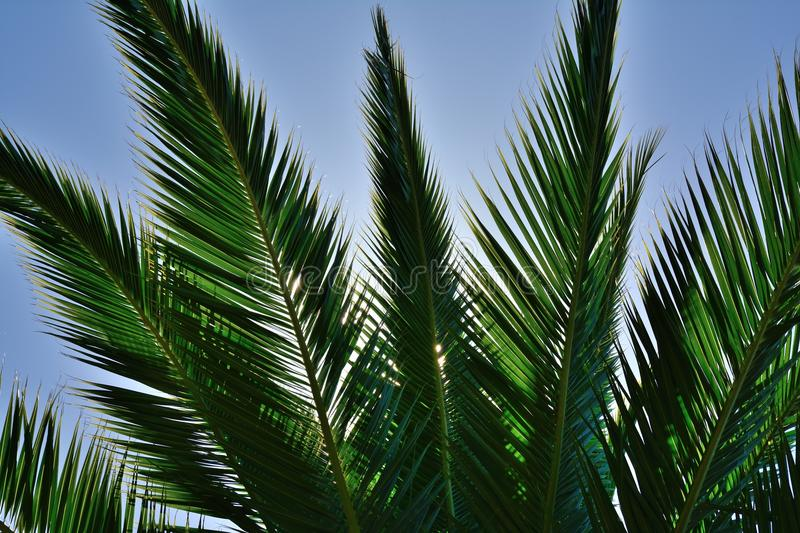 Download Palm leaves stock photo. Image of palms, translucent - 37893126