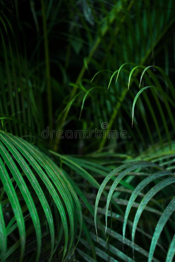 Palm leaves background in low key stock photo