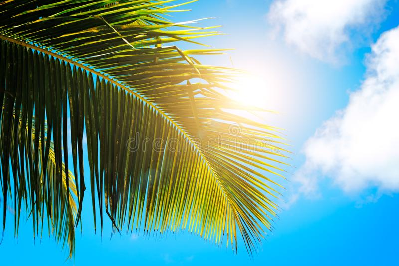 Palm leaves on blue sky background. weekend Holidays tropical beach concept backgroundPalm leaves on blue sky background. weekend royalty free stock image