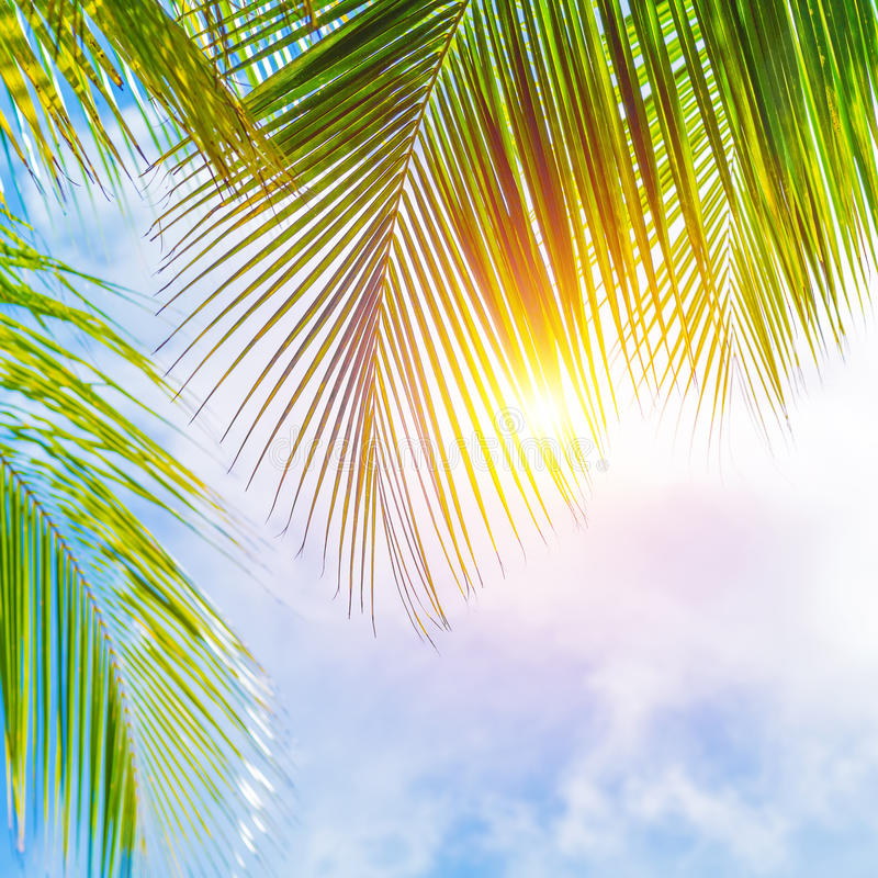 Palm leaves border sto...