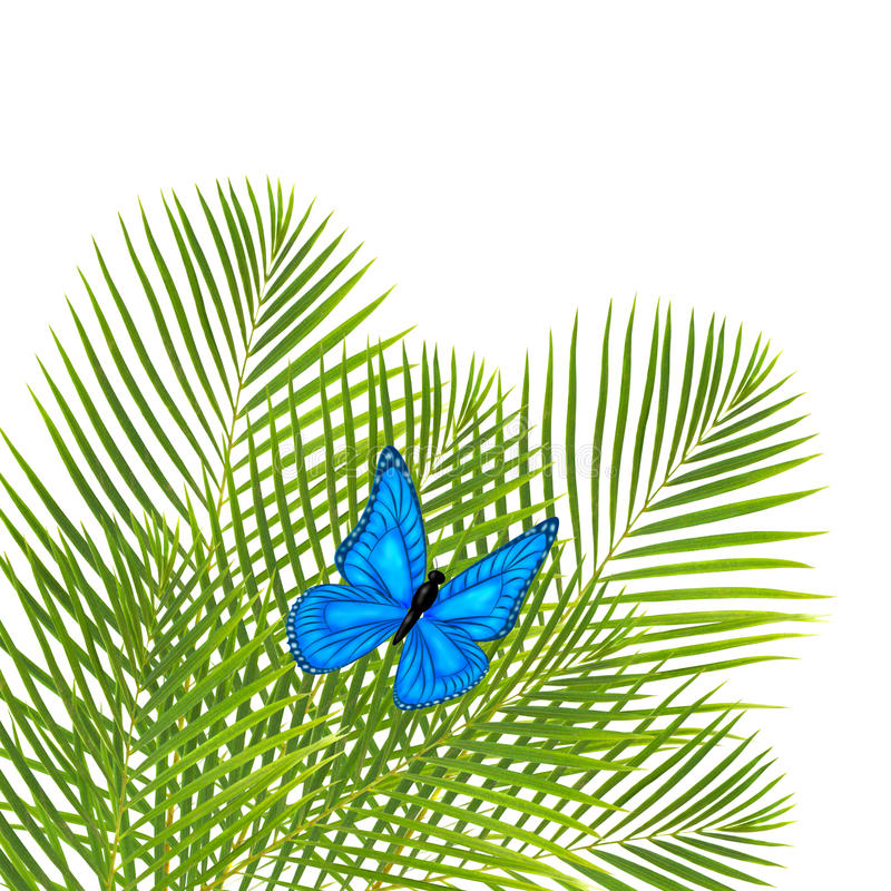 Palm Leaves With Butterfly Stock Photo