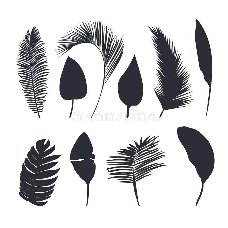 Palm leaves dark silhouettes isolated on white background stock photography