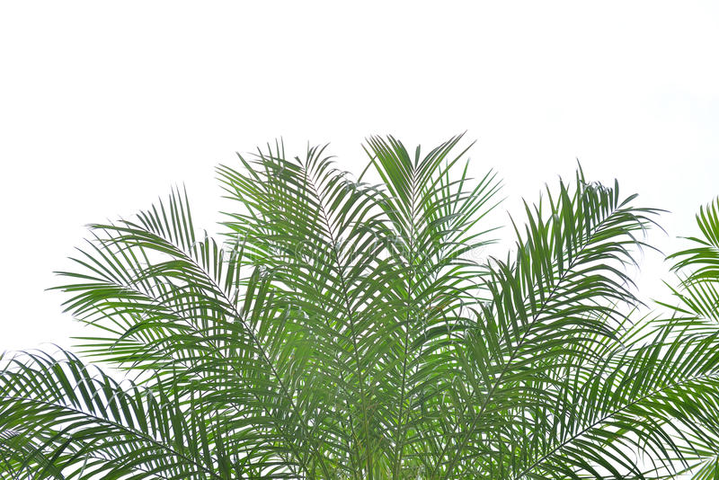 Download Palm leaves stock image. Image of image, pattern, photograph - 34819409