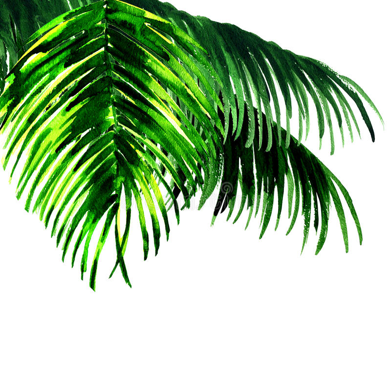 Palm leaves isolated on white stock illustration