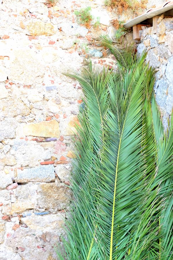 Palm Leaves Leaning on Brickwalls royalty free stock images