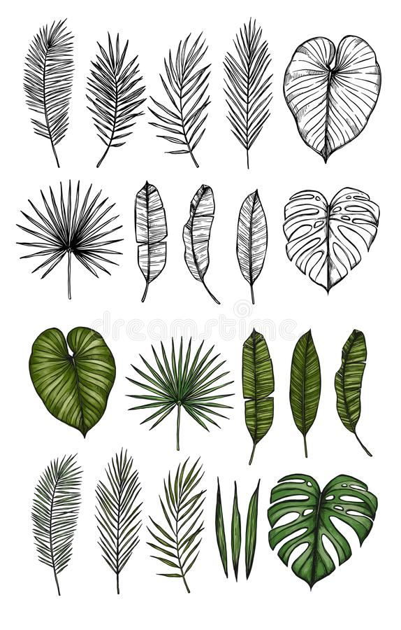 Palm leaves monstera, areca, fan, banana. Hand drawn vector il vector illustration