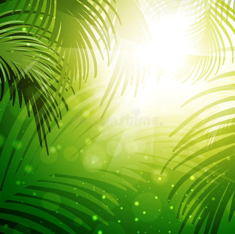 Download Palm Leaves stock vector. Image of illustration, plant - 31024737