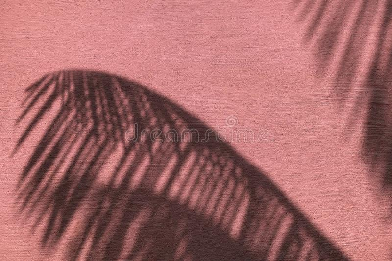 Palm leaves shadow on neon pink color painted concrete wall texture summer background royalty free stock images