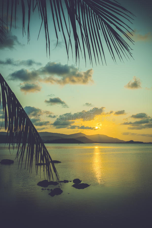Palm leaves silhouette over sunset on Koh Samui. royalty free stock photography
