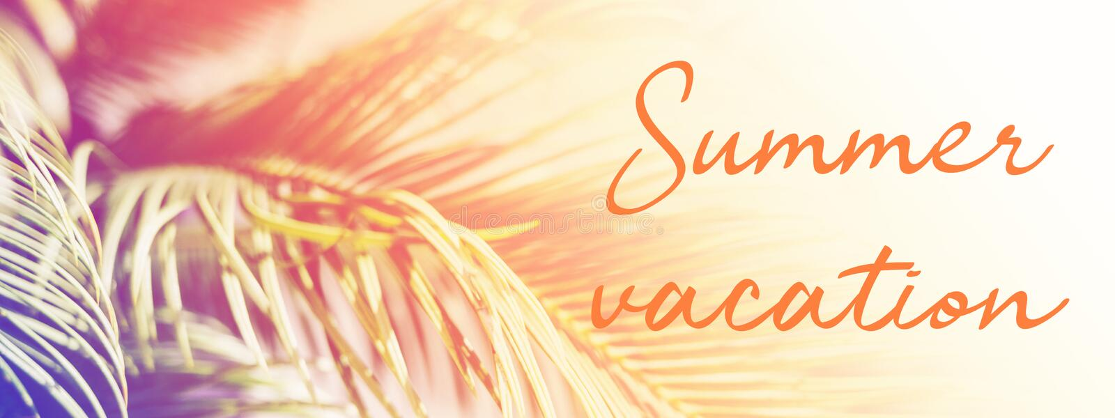 Palm leaves in sunlight with inscription Summer vacation. stock photos