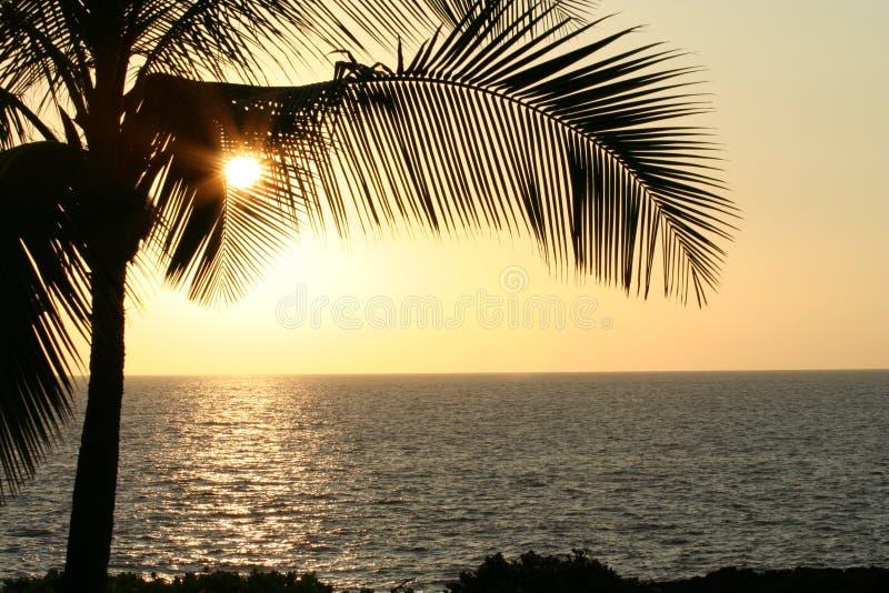 Download Palm Leaves At Sunset Horizontal Stock Image - Image: 23448081