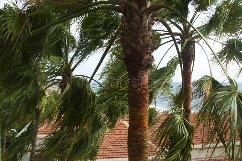 Palm leaves swaying in the wind stock photos