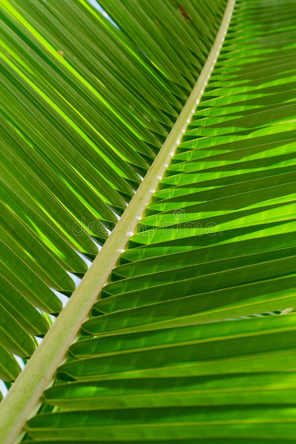 Download Palm Leaves stock photo. Image of frame, climate, summer - 40643818