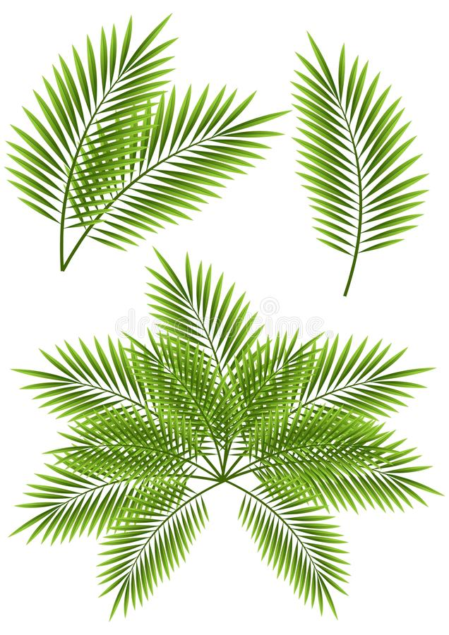 Palm leaves stock illustration