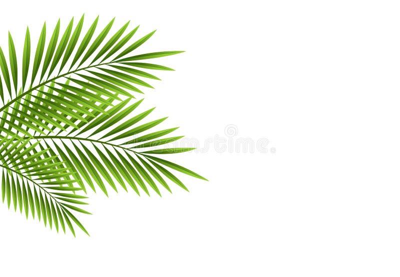 Palm leaves. Vector illustration of palm leaves on white background vector illustration