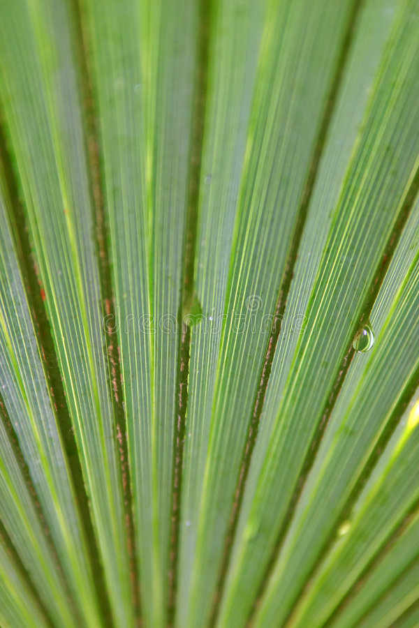 Palm leaves water droplets