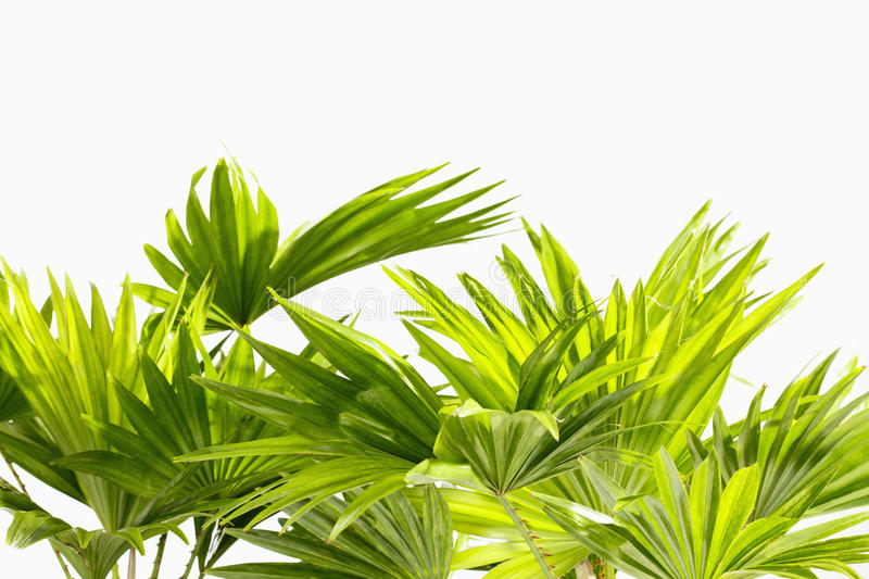 Palm leaves on white background stock photos